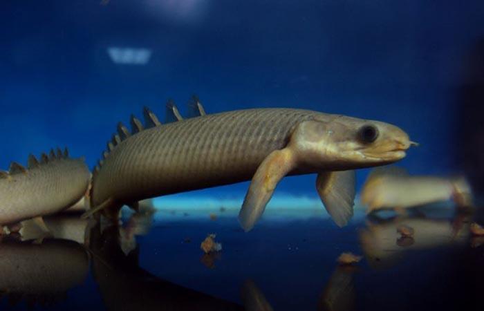 Kormleniye-pridonih-ryb
