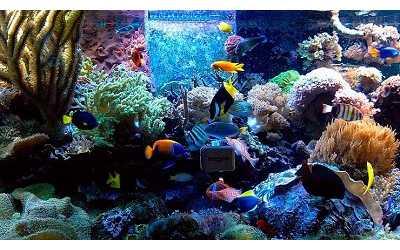 Кормление морских аквариумных рыбок
